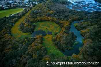 O rio Gravataí virou um tapete verde - Jornal Expresso Ilustrado