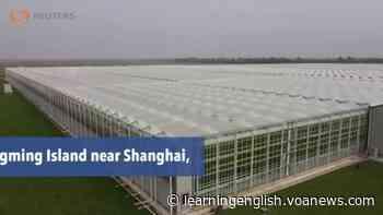Coronavirus Crisis Creates Changes in China's Food Supply Chain - VOA Learning English
