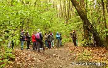 A Pinerolo si attraversa il bosco per conoscere la diversità - TorinOggi.it