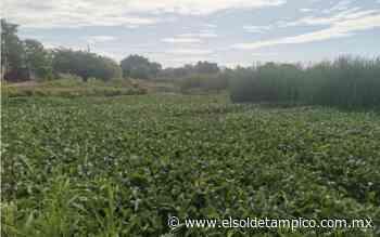 Cárcel a quien rellene lagunas en Madero - El Sol de Tampico