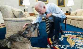 Joe Biden heartbreak: President and wife Jill say tearful goodbye to family dog Champ