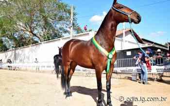 Cabo Frio realiza a 1ª Exposição do Cavalo Mangalarga Marchador - O Dia