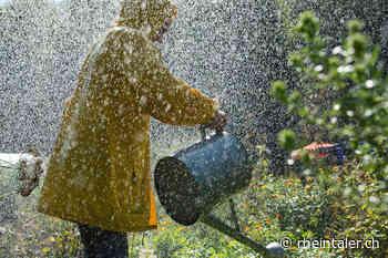 Garten: Tipps zum Giessen - Der Rheintaler