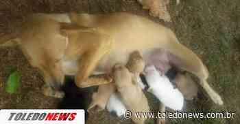 Três filhotes de cachorro são brutalmente mortos em Toledo - Toledo News