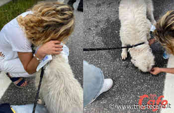 Cane abbandonato lungo il Vallone di Gorizia, coppia dal cuore d'oro triestina lo salva!! - triestecafe.it