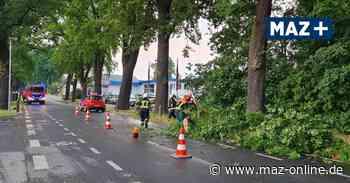 Feuerwehreinsatz in Michendorf: Ast gerät auf Straße - Märkische Allgemeine Zeitung