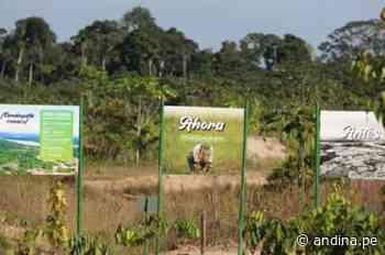 Amazonía renace: recuperan 700 ha en Reserva Nacional Tambopata con especies nativas - Agencia Andina
