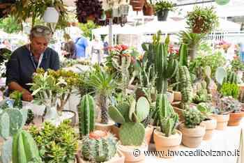 Giardinaggio e cultura del verde: sboccia Merano Flower - La Voce di Bolzano