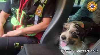 Coppia di Mirano in difficoltà sul Verena: il cane morso da una vipera - Il Gazzettino