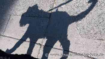 Fünfjährige verletzt - Nicht angeleinter Hund beißt Kind in Altensteig - Schwarzwälder Bote