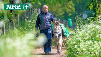 Goch: Mit Esel Socrates wandern und den Alltag vergessen - NRZ News