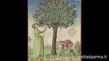 Dal noce al nocino: leggende e tradizioni - Gazzetta di Parma