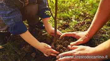 Parma, dal 5 all'11 luglio il Festival della Green Economy: il programma - il Resto del Carlino