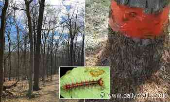 Upstate NY hit by explosion of gypsy moth caterpillars stripping trees and filling gardens with poop