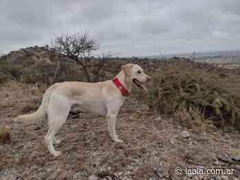 La brigada de canes de Santa Rosa participa en la búsqueda de una menor desaparecida - Luciana Massi