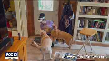 Pet sitters care for wide-variety of animals - FOX 13 Tampa Bay