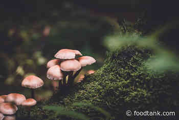 How Fungi Can Help Solve the Climate Crisis – Food Tank - Food Tank