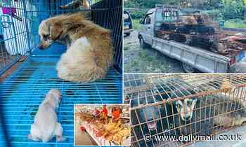 Dozens of dogs bound for slaughter at Chinese festival are saved