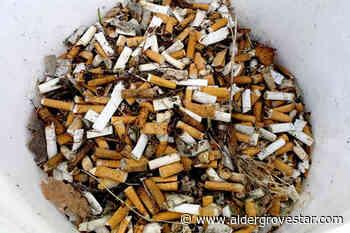 VIDEO: 3300 cigarette butts picked from downtown Aldergrove - Aldergrove Star