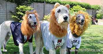 Football-mad dog owner dresses pets as 3 lions to support England in Euro 2020