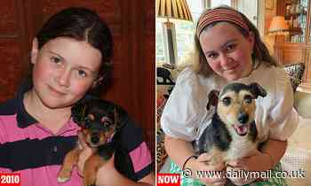 Missing pet dog turns up more than a DECADE later: Crumpet the Jack Russell is found