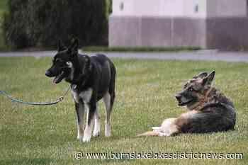 Bidens' older dog, Champ, has died; German shepherd was 13 - Burns Lake Lakes District News