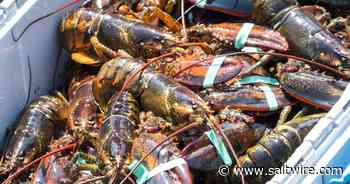 Man caught in Shediac, N.B. with $25000 in lobster stolen from P.E.I. facility jailed | Saltwire - SaltWire Network