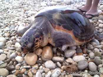 Ribera, i bambini protagonisti della giornata mondiale delle tartarughe marine - Canicatti Web Notizie