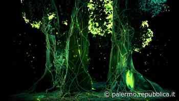 Palermo, l'Orto botanico apre di sera per un'installazione multimediale - La Repubblica