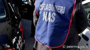 Palermo, sequestrati oltre 5 mila chili di ricotta non tracciata in un bar di via Roccella - Giornale di Sicilia