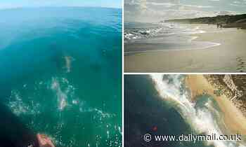 Shaken bodysurfer reveals terrifying moment he came face to face with deadly six foot shark