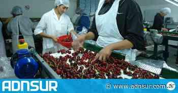 La producción de cerezas y olivos fue declarada de interés provincial en Chubut - ADN Sur