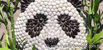 Artista embeleza praias com esculturas de animais feitas com conchas - Bol - Uol