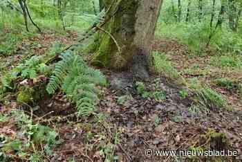 Op deze plek werd het lichaam van Jürgen Conings gevonden