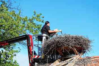 Salem: Jungstörche vom Affenberg fliegen im Herbst mit einem Sender huckepack in den Süden - SÜDKURIER Online