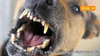 Hund beißt Paketboten in Senden - war das vermeidbar? - Augsburger Allgemeine