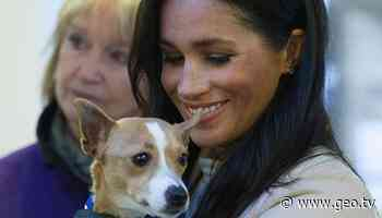 Meghan Markle grateful to those who gave forever homes to animals amid pandemic - Geo News