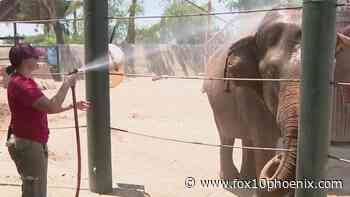 How animals at the Phoenix Zoo are staying cool during the heatwave - FOX 10 News Phoenix