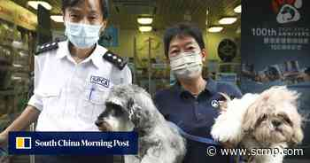 Hong Kong SPCA marks 100 years of preventing animal cruelty - South China Morning Post