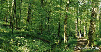 Kraichtal: Durchatmen am geheimnisvollen Pfannwaldsee - Sinsheim - Rhein-Neckar Zeitung