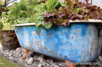 Virtual garden tour for Victoria Hospice features trio of back yards – Vancouver Island Free Daily - vancouverislandfreedaily.com