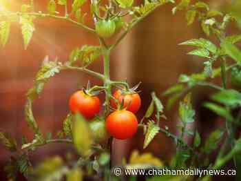 Farmers' seeds help growth of public housing gardens