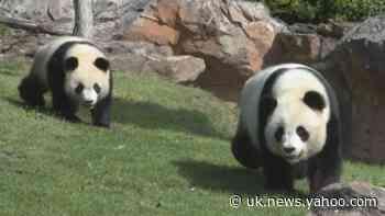 The secrets of France's Beauval Zoo - Yahoo News UK