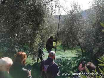 Un itinerario alla scoperta degli uliveti dell'entroterra di Andora - AlbengaCorsara News