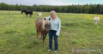 Meet a N.B. counsellor using horses to help people struggling with their mental health