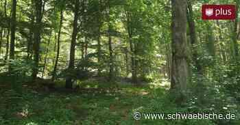 Warum Westhausen Bäume unter Naturschutz stellen will - Schwäbische