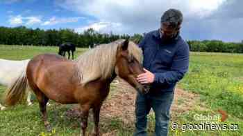 New Brunswick mental health counsellor uses equine-assisted therapy to help clients