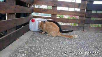 Dolores: la historia diaria, con acoso incluido, de una cuidadora de gatos - ESdiario - Información para decidir