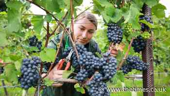 National park could be paradise of wineries | News - The Times