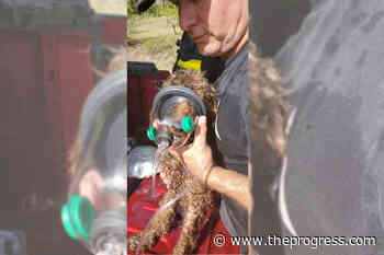 PHOTOS: 11 dogs rescued, home destroyed in large blaze in Okanagan – Chilliwack Progress - Chilliwack Progress